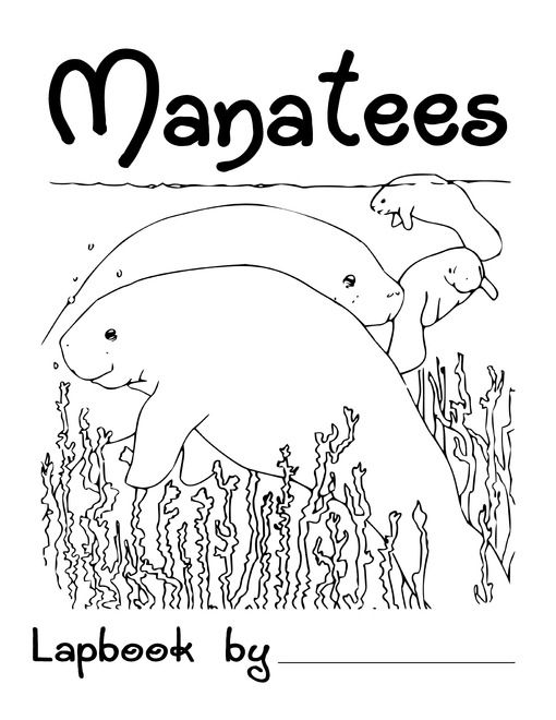 Free Manatee Lapbook Animal Coloring Books Coloring Books