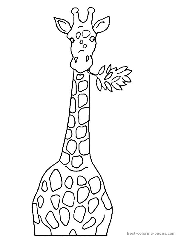 Giraffe Head Coloring Pages Giraffes Coloring Pages Mandala