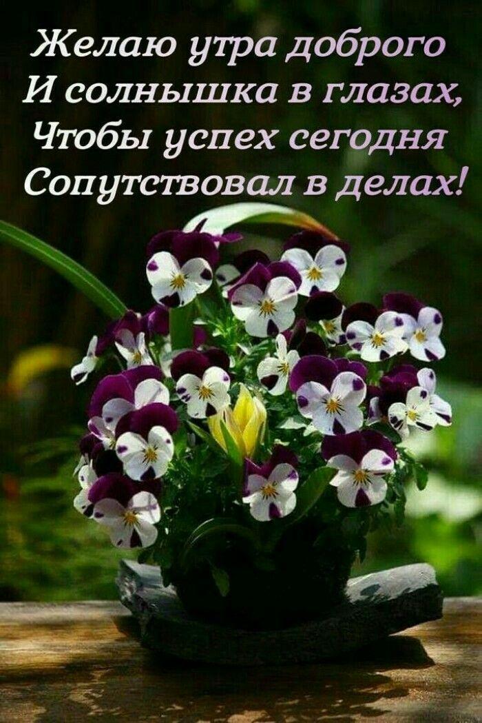картинки цветы с цитатами хорошего настроения без