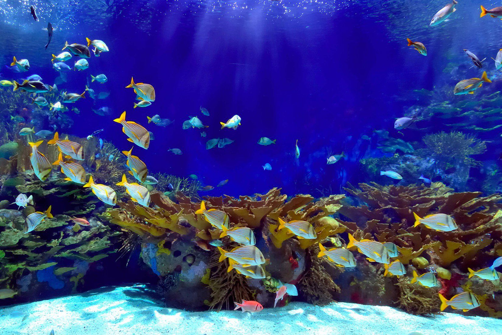 Deep Blue Underwater Wallpaper Mural (With images