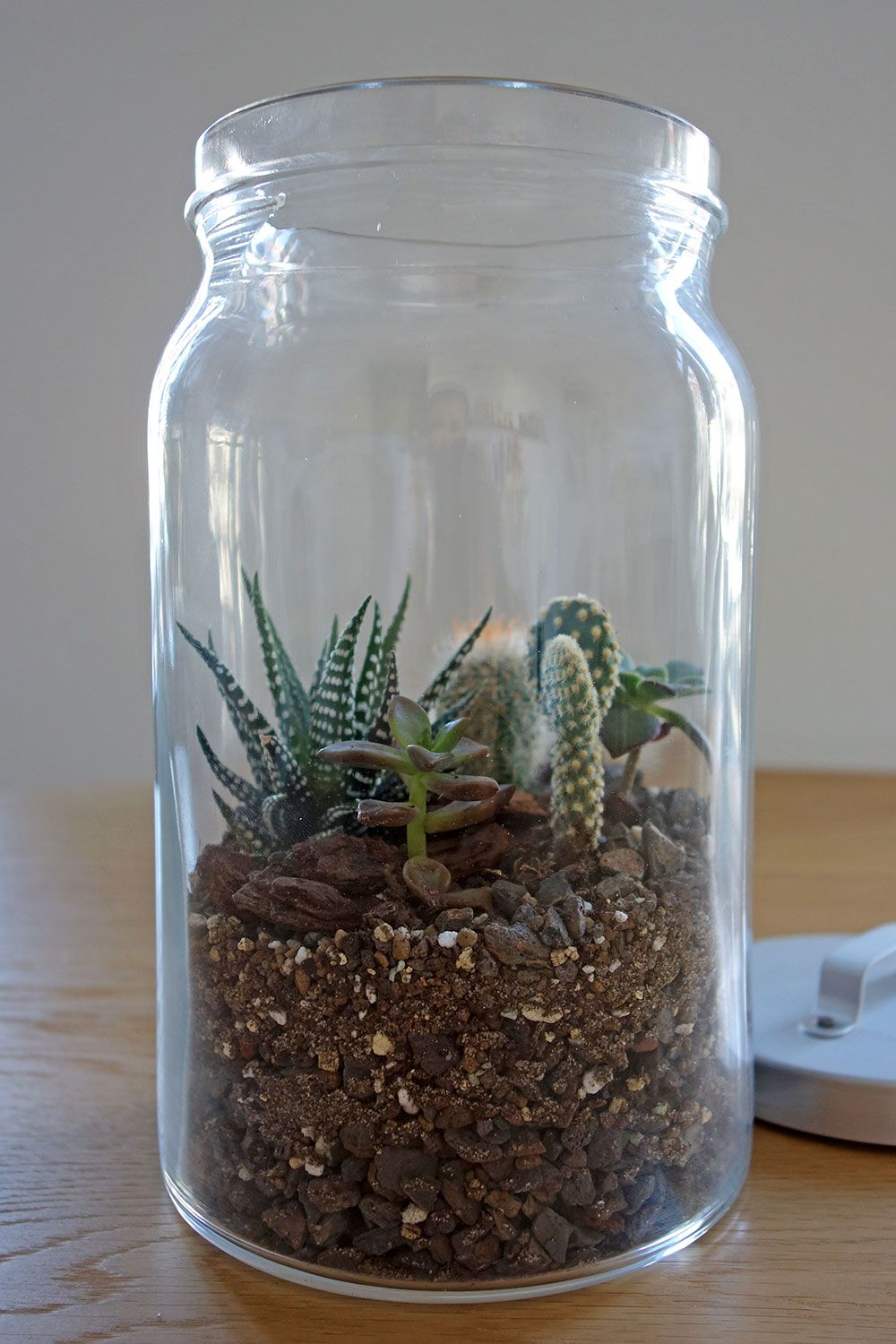 diy mini terrarium kakteen im glas garten pinterest mini terrarium terrarium und glas. Black Bedroom Furniture Sets. Home Design Ideas