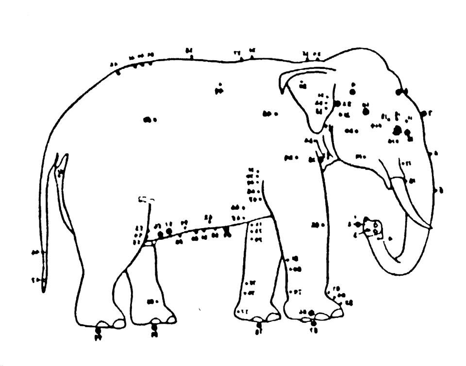 Elephant acupuncture would love to do same points do you elephant acupuncture would love to do same points ccuart Choice Image