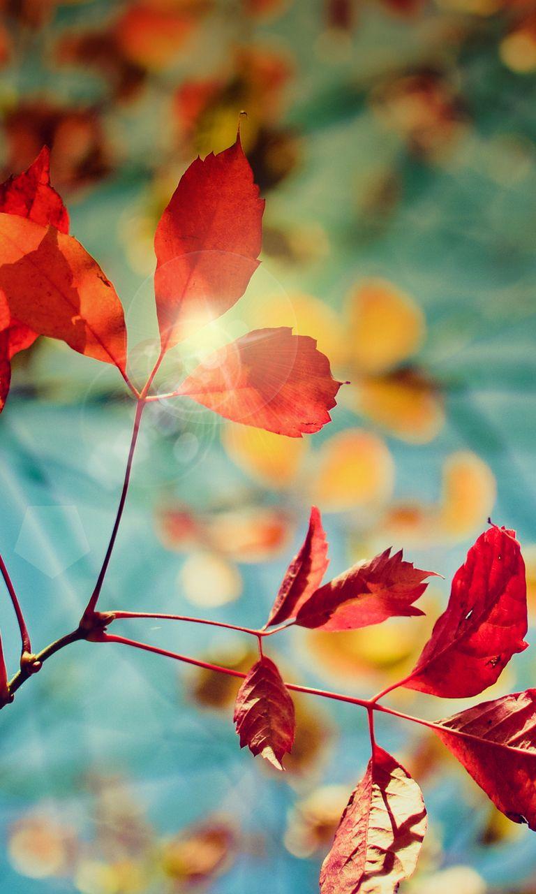 Herfstbladeren Autumn Phone Wallpaper Iphone Wallpaper Fall Fall Wallpaper