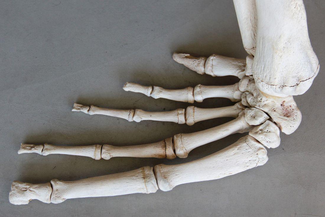 sea lion hand | creatureDesign | Pinterest | Anatomy