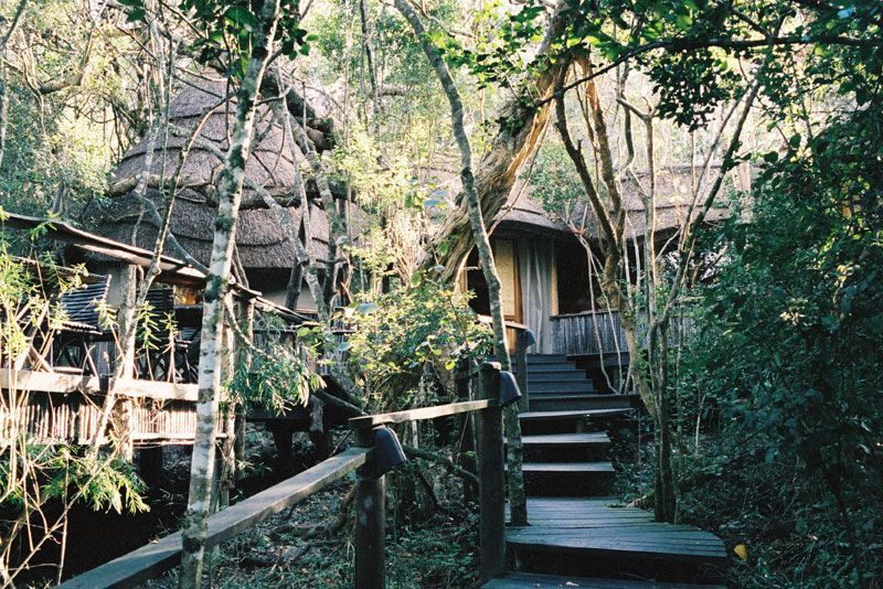 The Phantom Forest Eco Reserve Knysna Knysna Unique Hotels Forest
