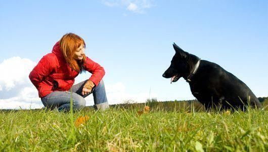 Train Dog S Brains Dog Clicker Training Dog Training Training