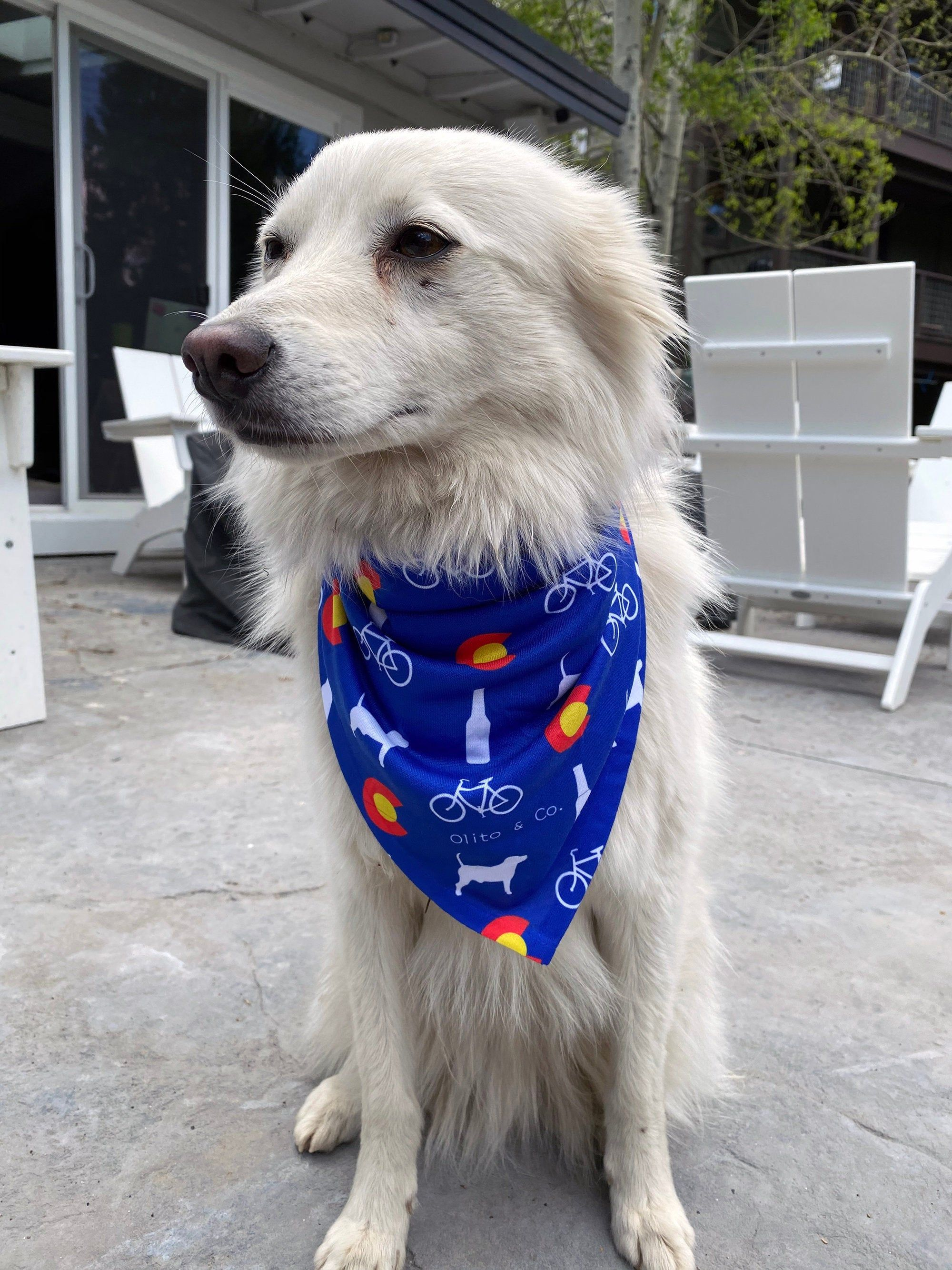 Colorado Dogs /& Cats Bandanna