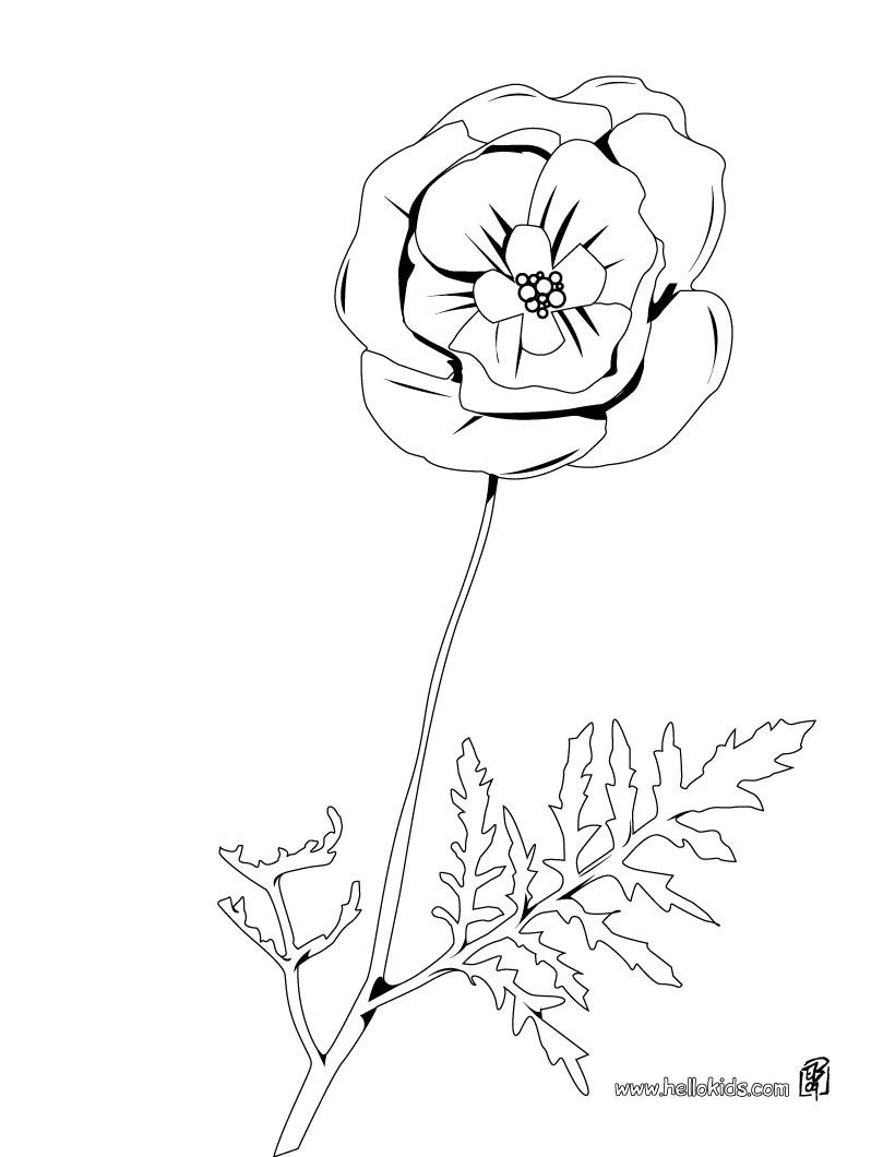 Best Poppy Coloring Pages 87 Beautiful Poppy coloring page