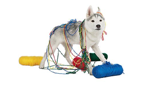 Dog Training Puppy And Adult Dog Training Classes Petsmart
