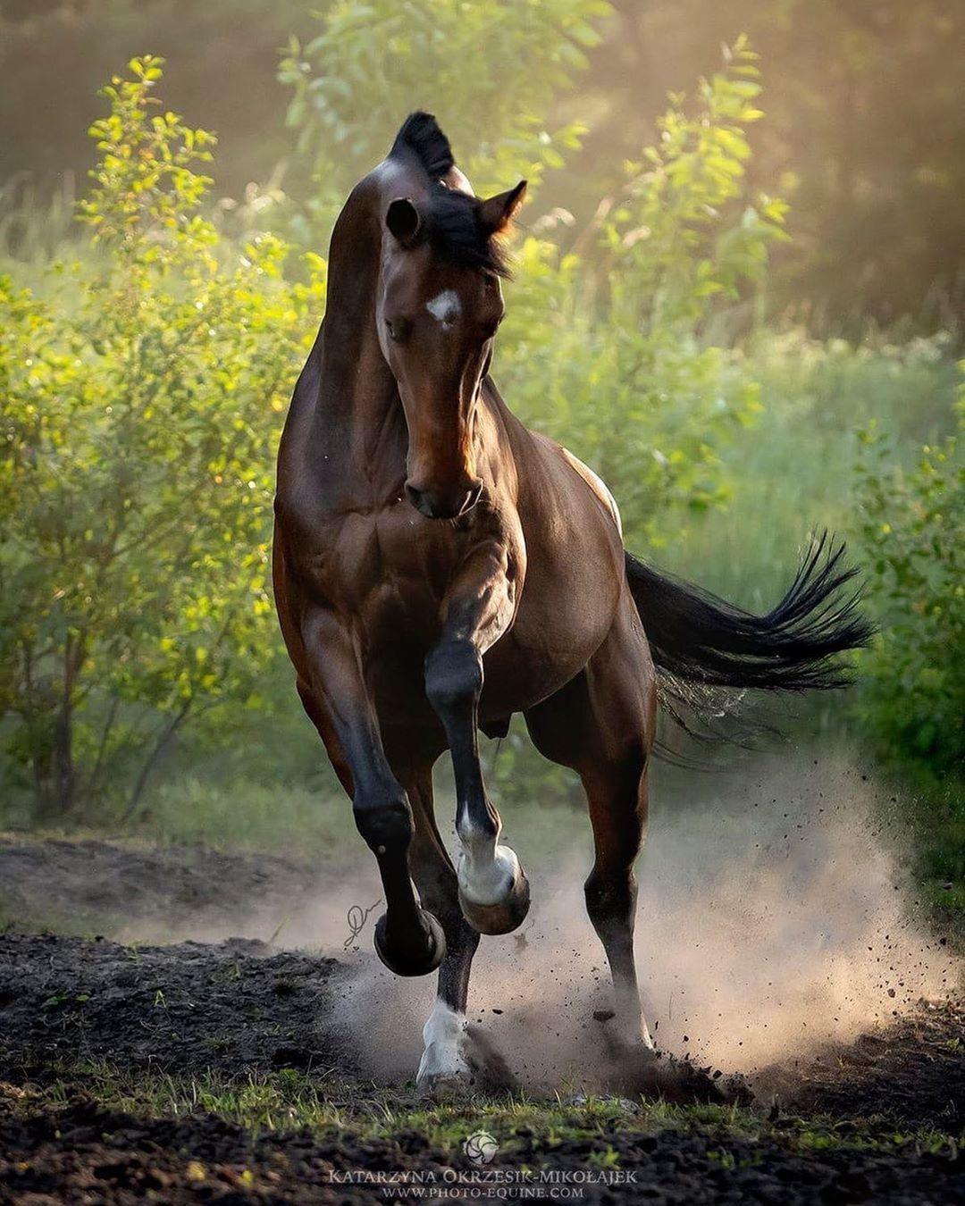 классная картинка с лошадью яркая прихватка