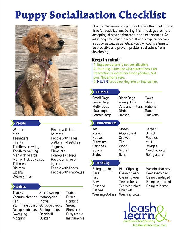 Puppy Training And Socialization Checklist By Leash And Learn