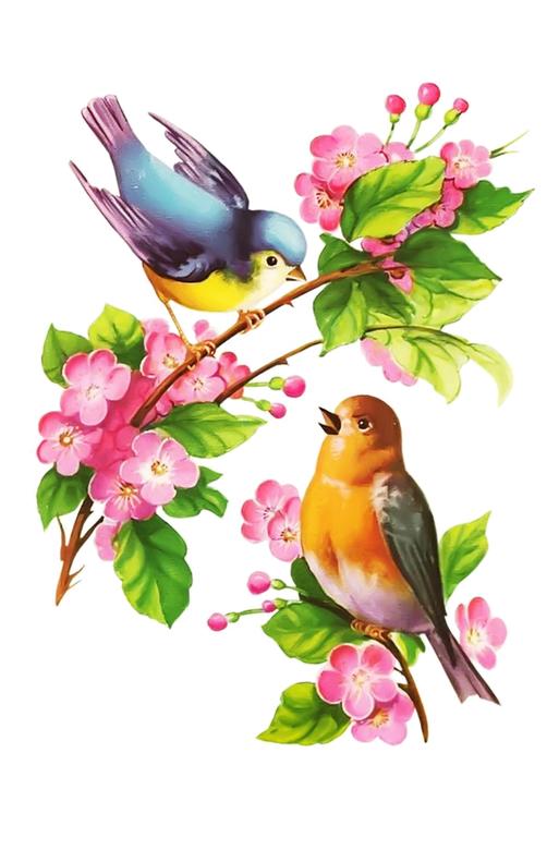 oiseaux,birds,dessin,png,couleur | Pinturas de pássaros, Pássaros ...