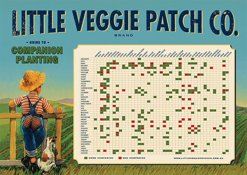 Companion Planting Poster  Planting Gardens And Plants