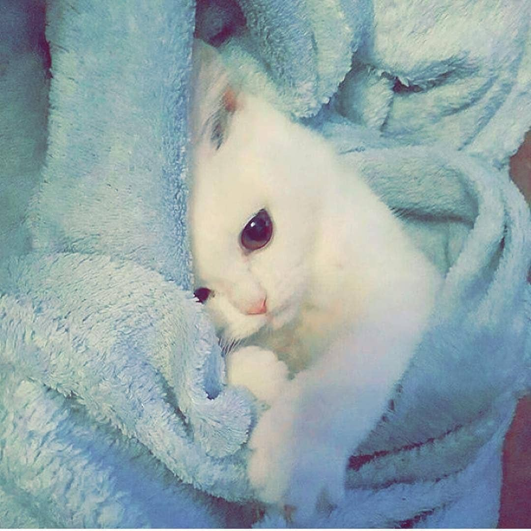 Pin by نازیہ صدیقی on cute pictures Kittens cutest