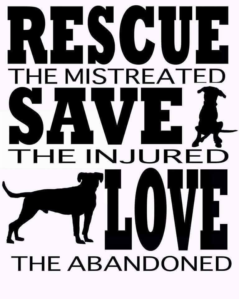Amen The Story Of My Life This Is Me Animals Dogs Pets