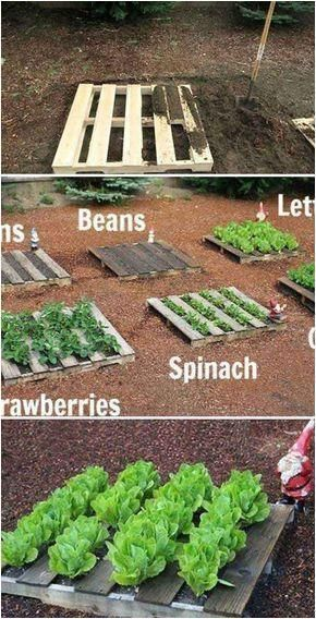 Photo of Best 20 Vegetable Garden Design Ideas for Green Living – MORFLORA#design #gard…