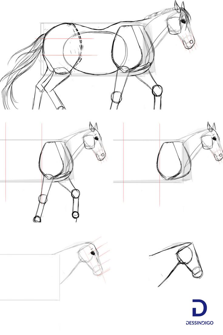 Comment dessiner un cheval apprendre dessiner avec - Cheval a dessiner facile ...