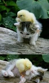 Image result for cute baby cats