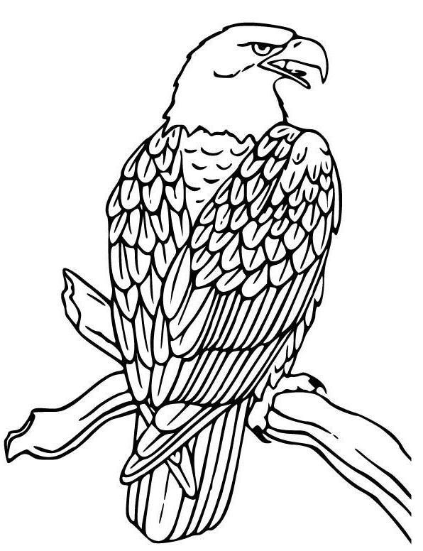 Adler Malvorlage Gratis การ ต นส ตว