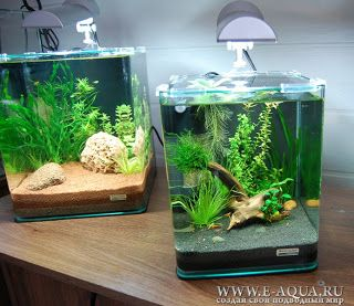 nano cubes kreativitet aquarium aquarium fische. Black Bedroom Furniture Sets. Home Design Ideas