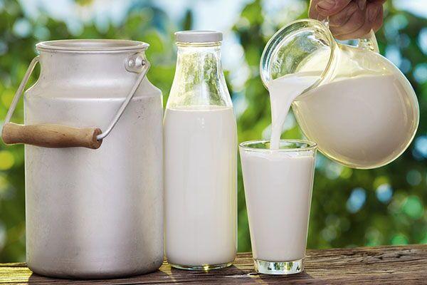 La Leche Fresca De Vaca Sin Procesar Tiene Un Mayor Contenido De