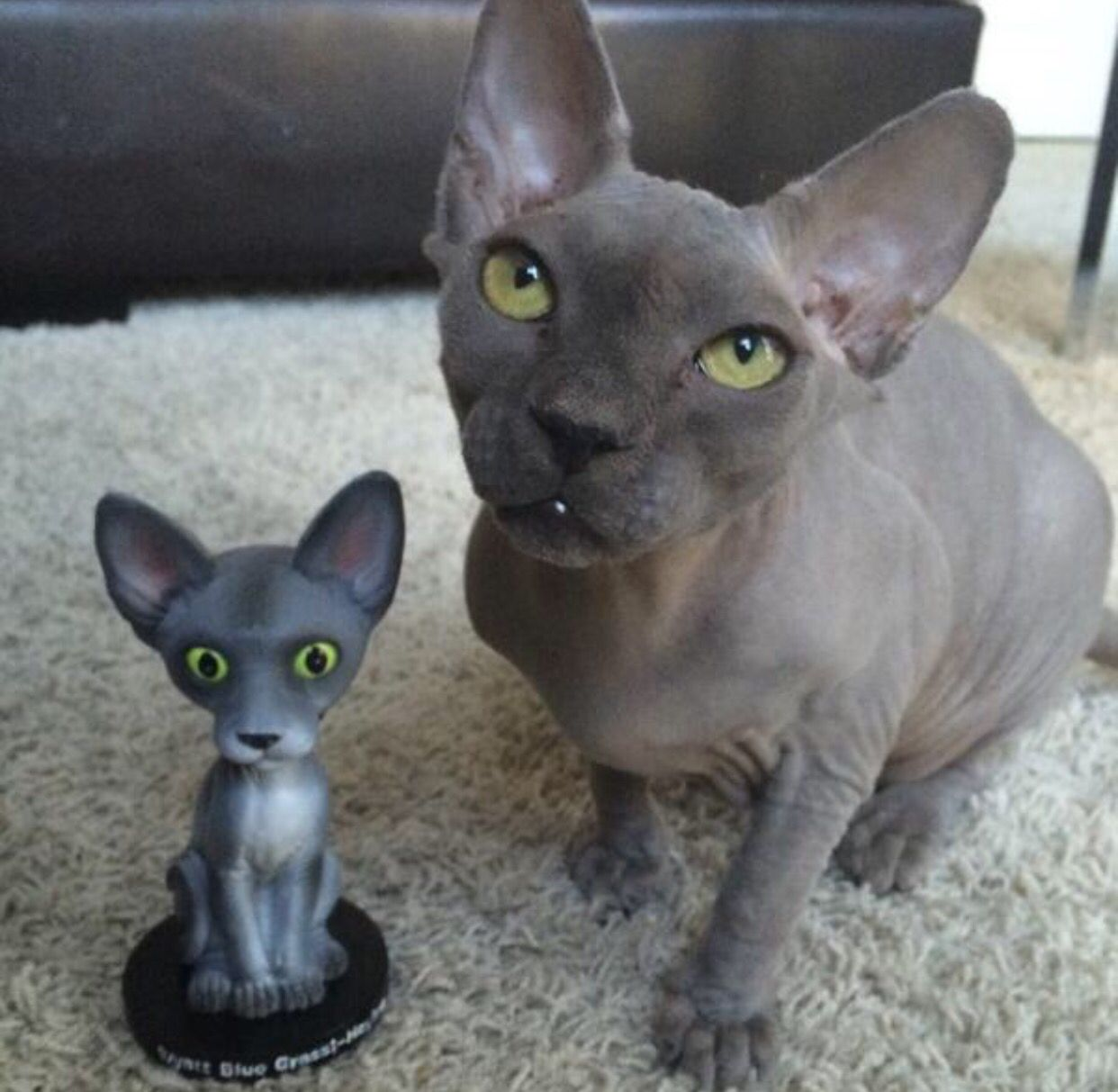 I love their cat Wyatt... Go check out his bobble head