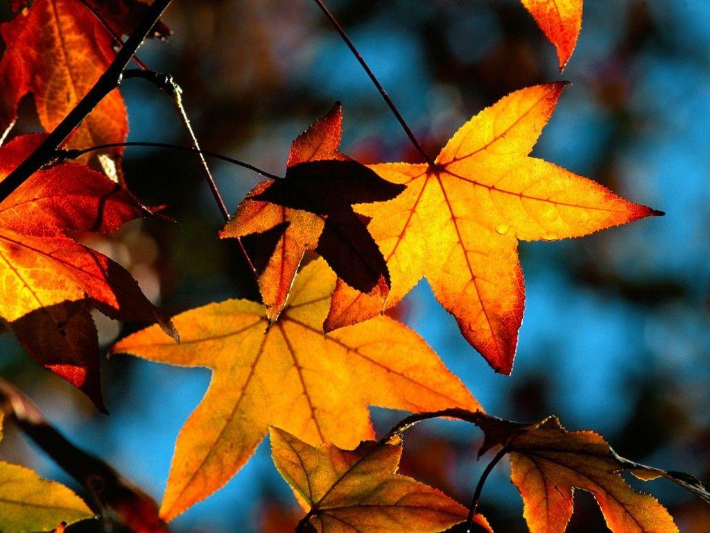 Desktop Achtergronden Herfst 38952 Herfst Landschap Wallpaper Achtergronden