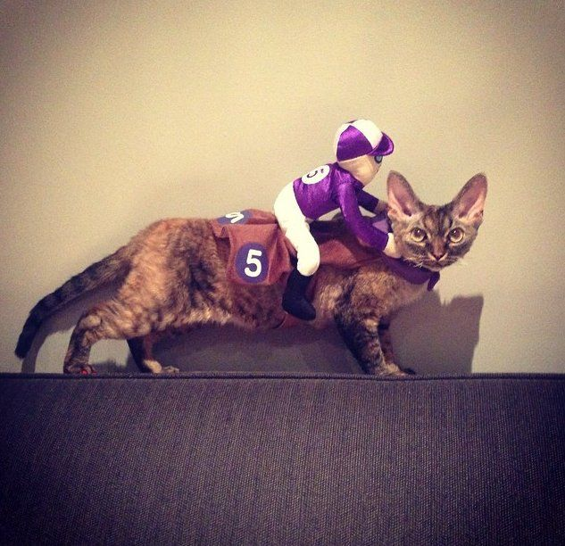 25 Pet Halloween Costumes That Are So Cute We Canu0027t Even & 25 Pet Halloween Costumes That Are So Cute We Canu0027t Even | Cat Cat ...