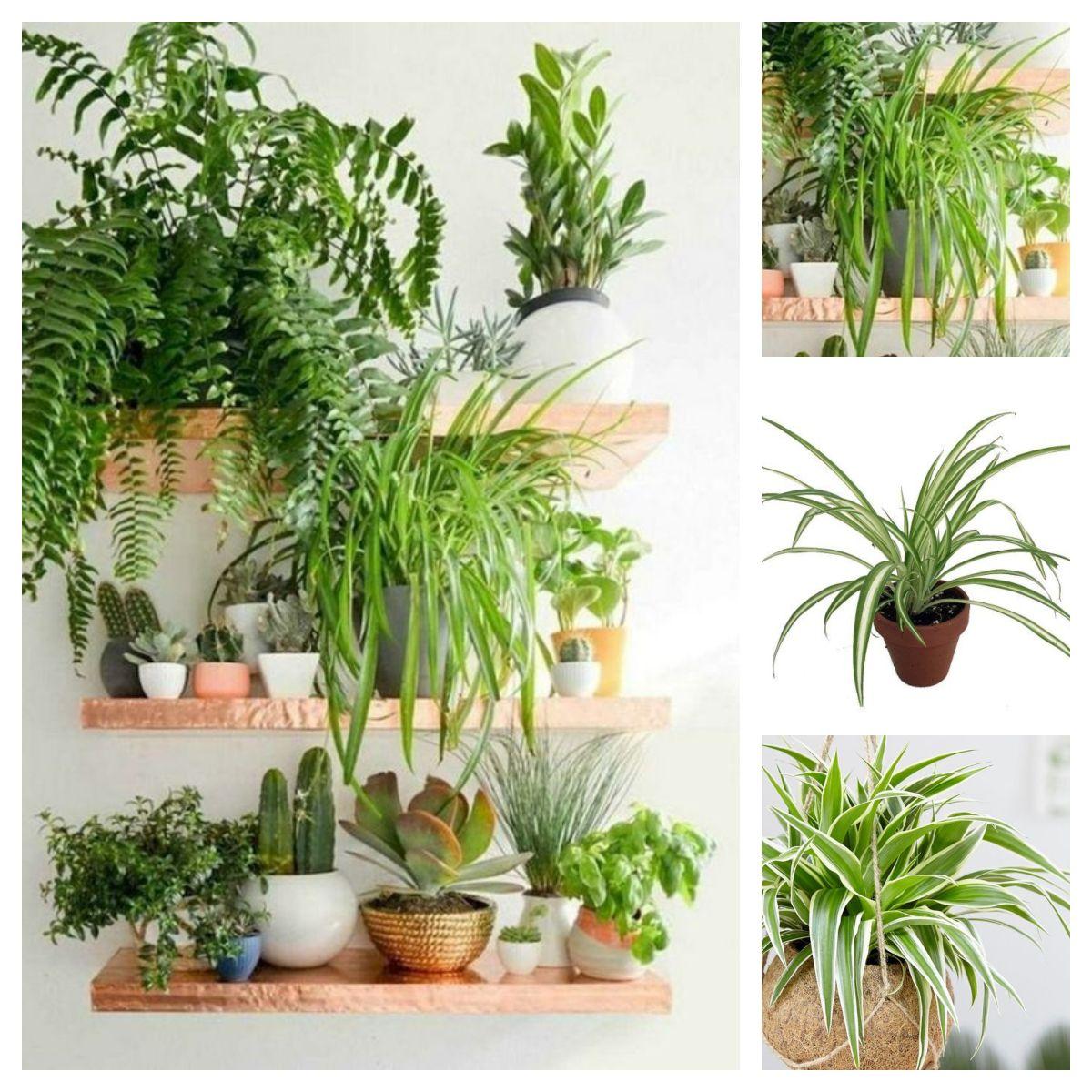 Green Design Blog Rosliny Doniczkowe Indoor Gardens Flowers For Everyone Low Maintenance Indoor Plants