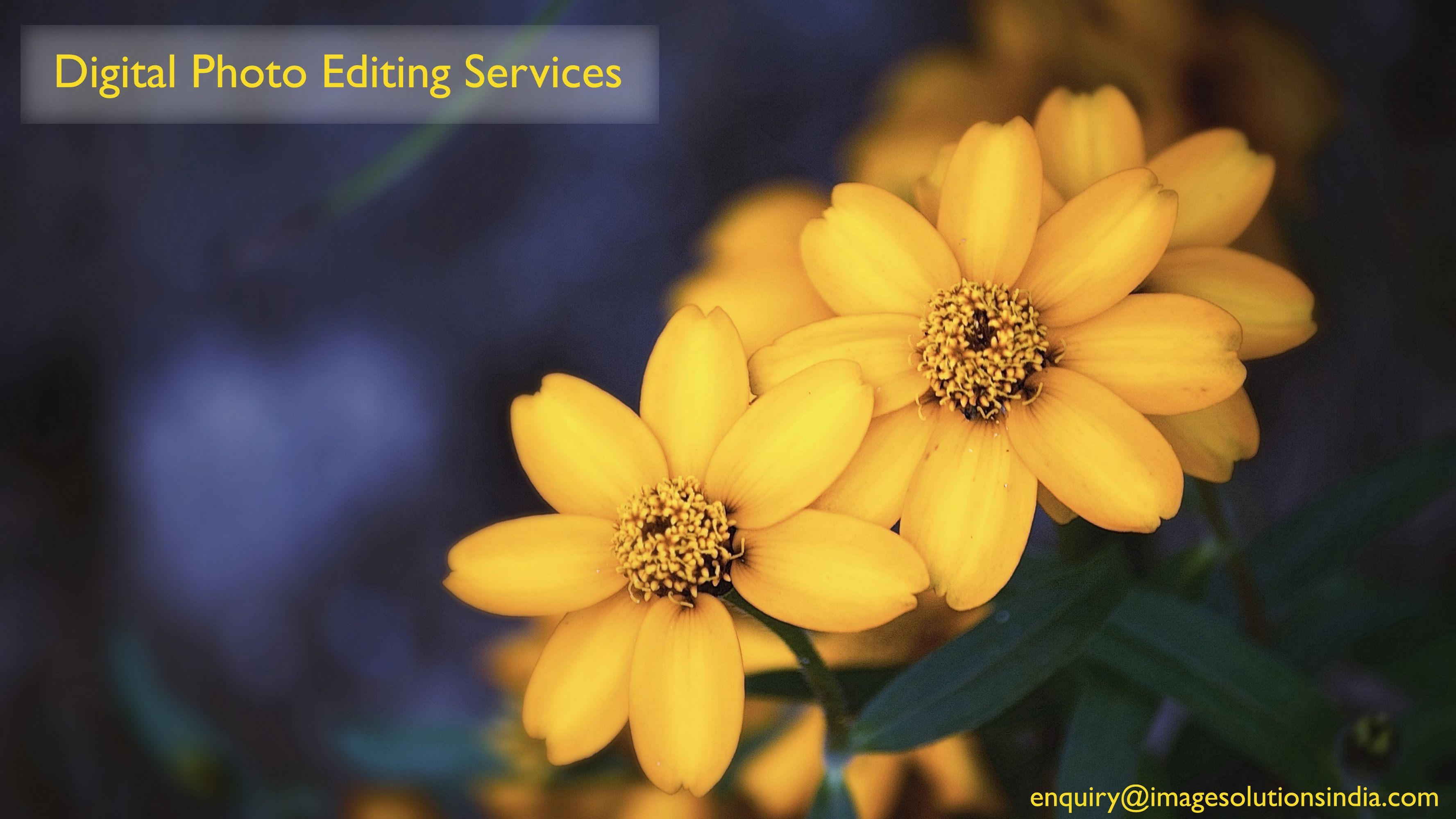 Rose professional editing service