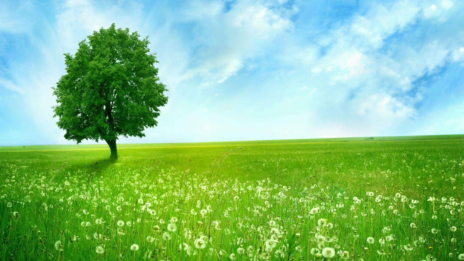 Download Beautiful Clean Green Nature Wallpaper Full HD