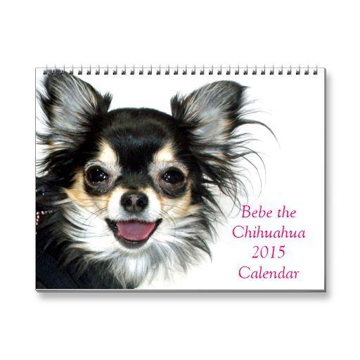 Bebe The Chihuahua 2015 Calendar Zazzle Com Chihuahua Cute