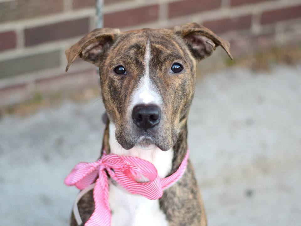 Puppy adoption centers long island