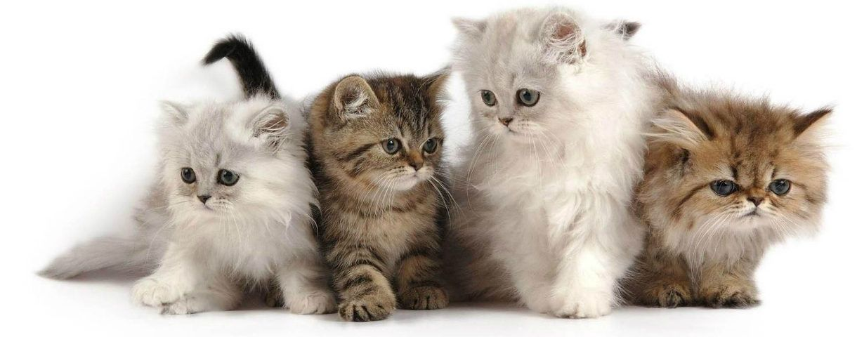 Can T Stop Your Cat Spraying In The House Then Worry No More Here On Stop Cat Spraying Blog You Will Get R Kittens Cutest Kitten Wallpaper Cute Cat Wallpaper