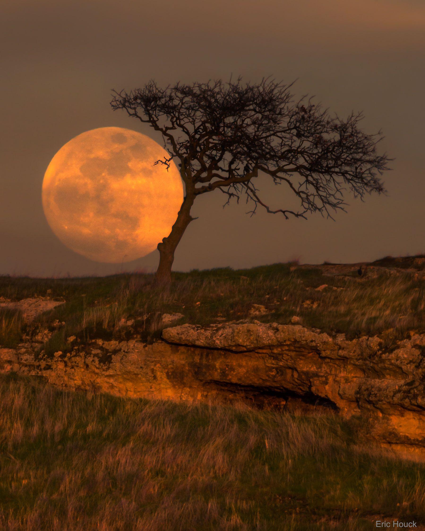 Blue Moon Tree. California, USA. Eric Houck | The Moon | Pinterest ...
