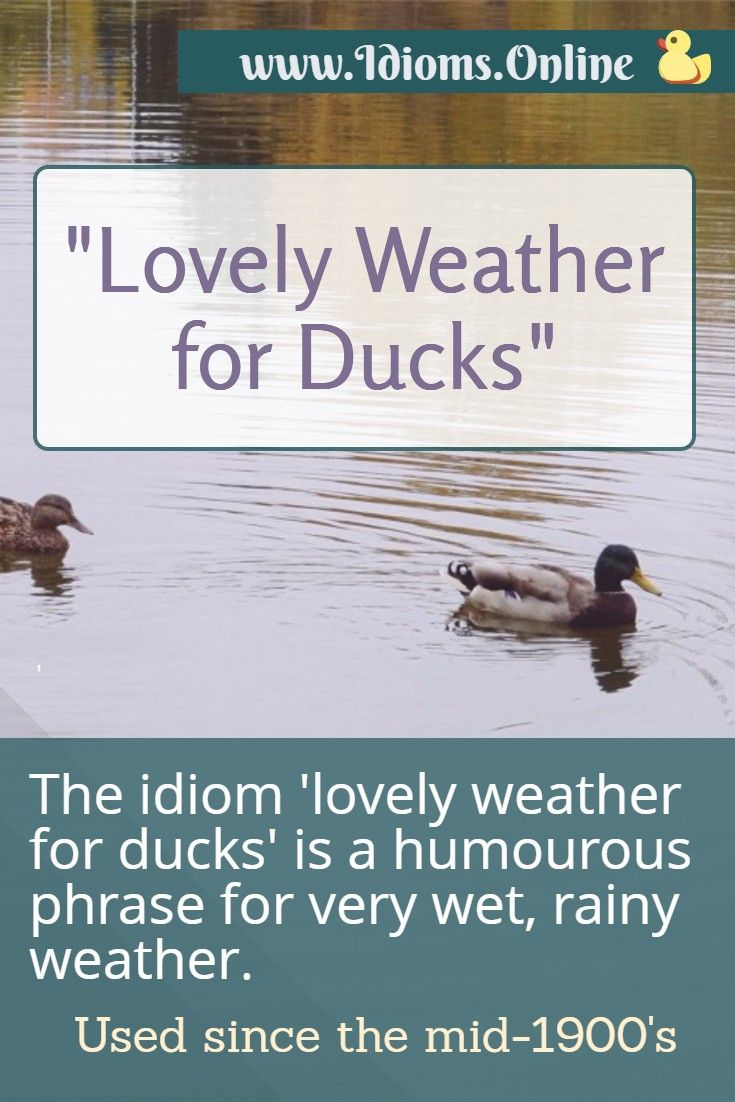Lovely Weather For Ducks Idioms And Phrases English Vocabulary