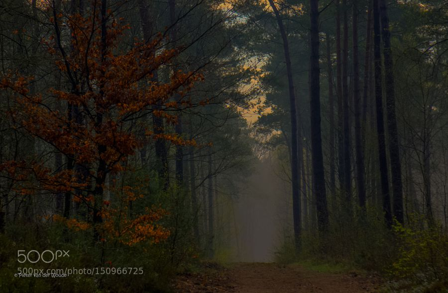 awakening forest by PietervanderWoude Nature Photography #InfluentialLime