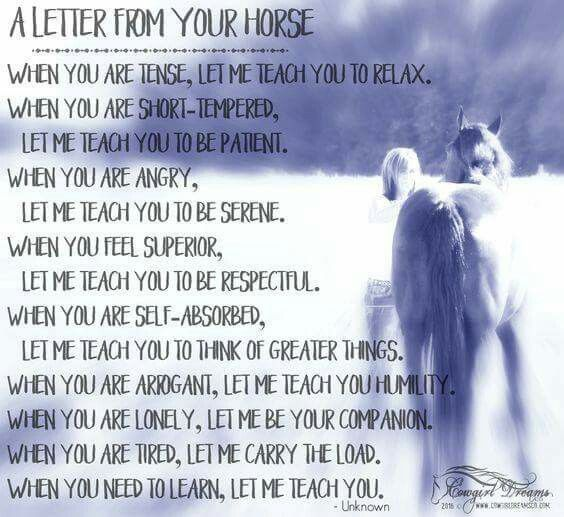 A letter from your horse