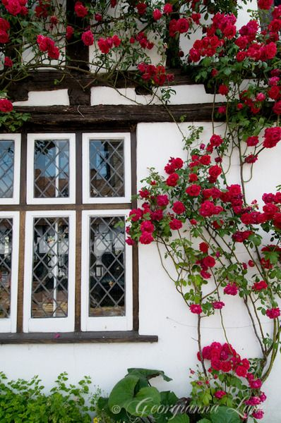 Beautiful Flowers Growing on the outside walls of an English Cottage...