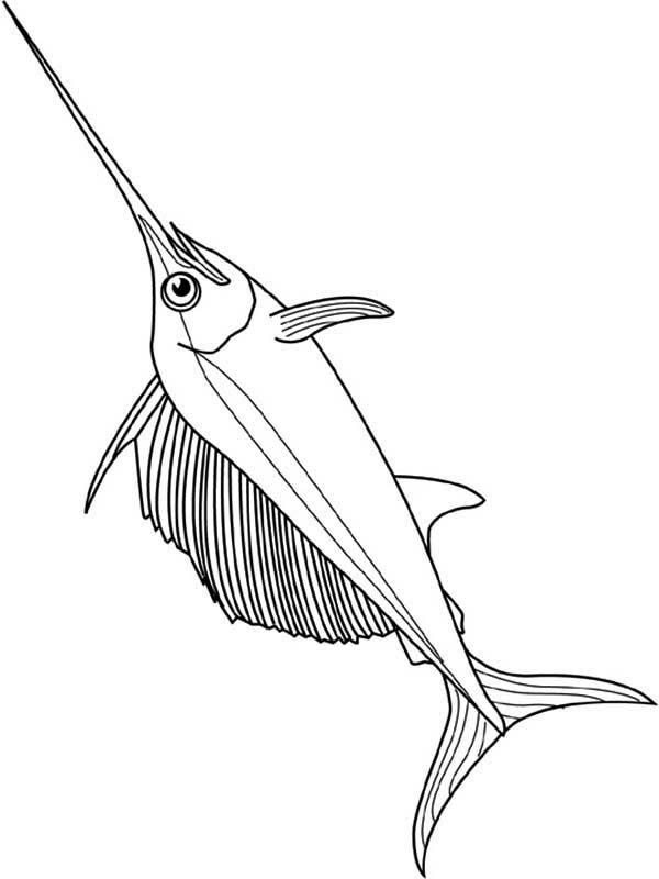 Very Strong Fish Swordfish Coloring Page Color Luna Coloring Pages Color Swordfish