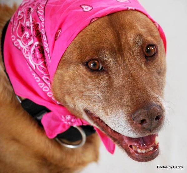 Noreen King Noreenking71 Poor Dog Animal Lover Staffies