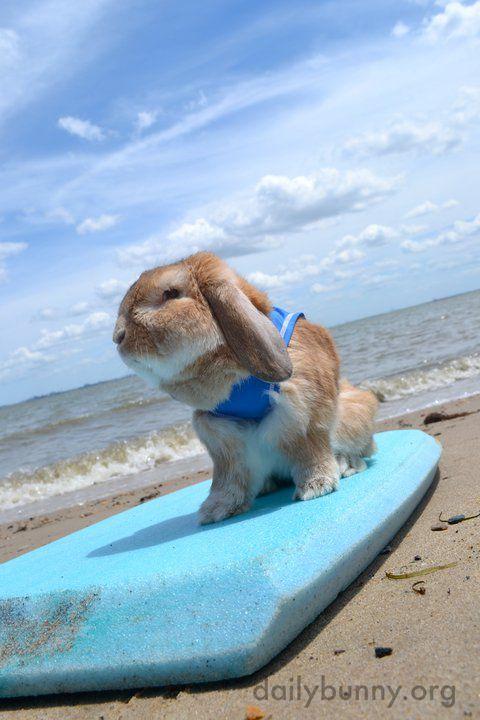 Sand rabbit beach house