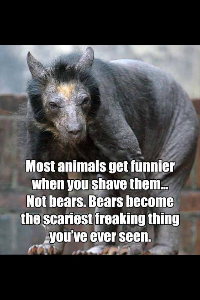 beat with no hair scary animals and fake scary animals pinterest