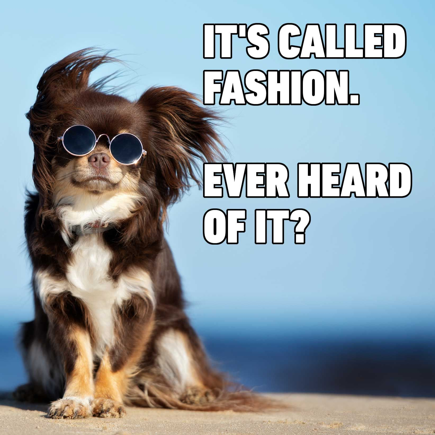 It S Called Fashion Deal With It Funny Dog Memes Animal Humor