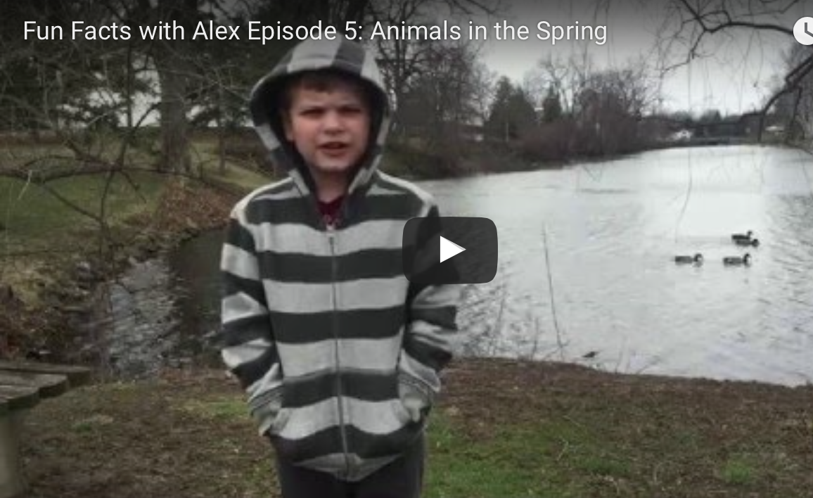 FFWA:  Animals in the Spring   http://www.funfactswithalex.com/episode-5-animals-in-the-spring-copy/