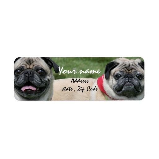 pug dogs address labels mailing labels for the dog lover