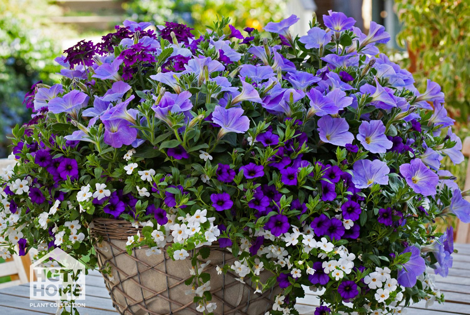New Hgtv S Friendly Fusion Hanging Baskets Container Flowers Purple Flowers Garden Container Gardening