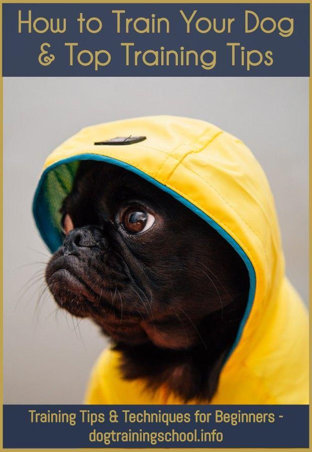Pin On Favorite Dog Training Tips