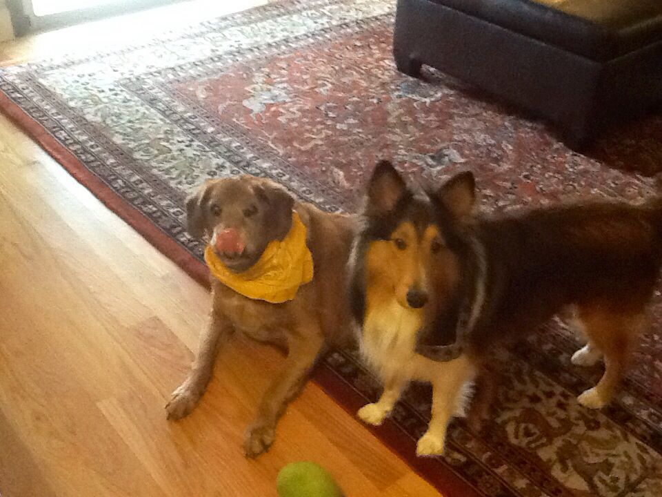 Rex with his brother-from-another-mother, Chase:)
