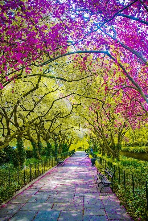 Spring, Central Park, New York City ♥ ♥